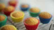 CU R/F PAN Shot of baked cupcakes cooling on baking rack / Auckland, New Zealand