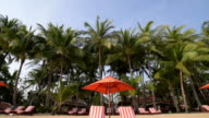 TD Shot of Beach chairs with red umbrella at palm tree beach