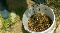 CU SLO MO Shot of Beans and husks falling into plastic bucket with mans boots / ElGouna, RED Sea, Egypt