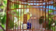CU Shot of bird in cage / Xian, Shaanxi, China