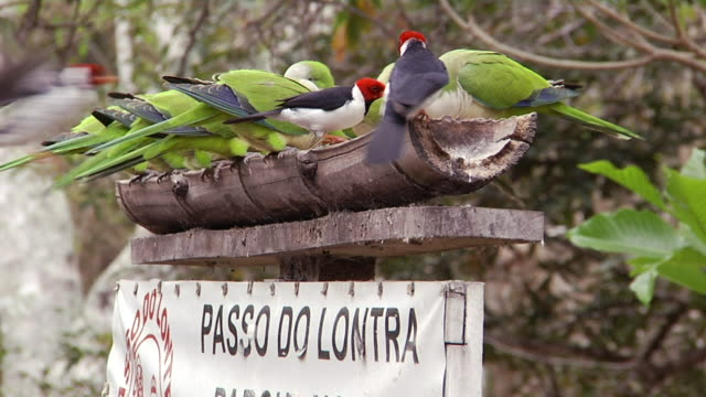 MS Shot of birds eating on sign board / Mato Grosso do Sul, Brazil