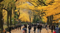 WS TU Shot of blowing autumnal fallen leaves and people walking down mall surrounded by autumn color trees / New York, United States