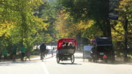 WS TU Shot of blowing leaves by gust and people and horse carriages under the autumn color trees / New York, United States