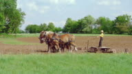MS PAN TS Shot of Blue pick up truck driving on road to young Amish boy working with horse drawn plough / Kingston, Wisconsin, United States