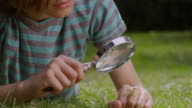 ECU Shot of Boy with magnifying glass, learning about insects / London, Hampstead, United Kingdom