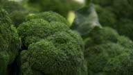 CU PAN Shot of Broccoli / Sydney, New South Wales, Australia