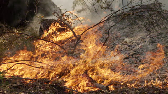 'MS SLO MO Shot of Burning trees and leaves on ground with flames, heat haze and rising smoke / Nannup, Western, Australia '
