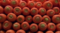 CU R/F Shot of Carrots stacked / Sydney, New South Wales, Australia