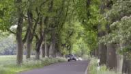 MS Shot of Cars drive through avenue, German Avenue Road / Put bus, Rugen / Mecklenburg Western Pomerania, Germany