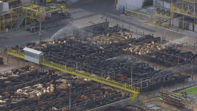 MS AERIAL TS ZO Shot of Cattle pens sprayed with water and pull out to industrial buildings / Nebraska, United States