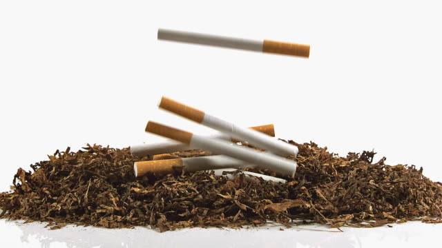 CU SLO MO Shot of Cigarettes Falling on Tobacco against White Background / Calvados, Normandy, France