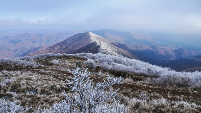MS ZI T/L Shot of Cloud sea and snow on branches at Hambaeksan mountain / Jeongseon, Gangwon do, South Korea