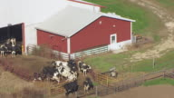 CU AERIAL ZO Shot of cows in pen at Off Campus Dairy Cattle Research Center in Columbia County / Wisconsin, United States