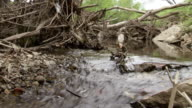 MS Shot of creek flowing through dead tree branches / Greensboro, North Carolina, United States