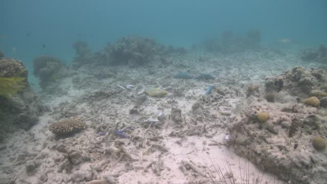 MS POV Shot of Dead fish after fish bomb / Semporna, Sabah, Malaysia