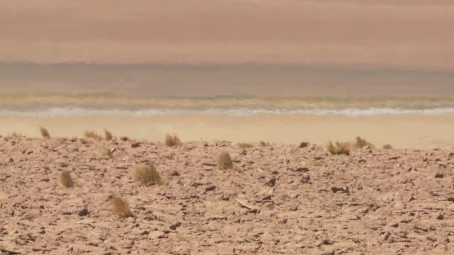 CU Shot of Dry soil Atacama desert in Andes mountains Heat haze in back side / San Pedro de Atacama, Norte Grande, Chile