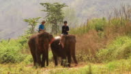 MS PAN SLO MO Shot of elephants eating tall grass and walking slowly in green pasture with two men riding on  / Elephant park near Luang Prabang, Luang Prabang, Laos