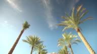 MS TD Shot of Emirates Palace with palm trees / Abu Dhabi, United Arab Emirates