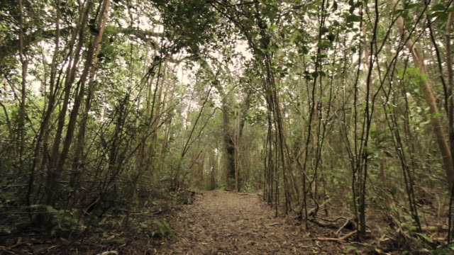 Forest (MS) United States  City pictures : Empty Path In Rain Forest Kokee State Park Kauai Hawaii United States ...