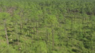 MS AERIAL TU Shot of endless pine trees forest area in Harrison and Stone Counties / Mississippi, United States