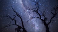MS T/L DS Shot of Eucalyptus trees and Milky Way of Karijini National Park in Western Australia / Australia
