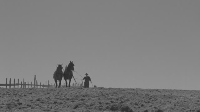 WS LA TS Shot of farmer working with horses