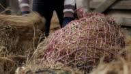 CU Shot of filling horse hay bags / Helland, Bodmin, Cornwall, United Kingdom