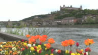 WS Shot of flower infront of river Main with Fortress Marienberg / Wurzburg, Bavaria, Germany