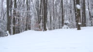 MS POV Shot of forest at side of ski run covered in deep powder snow  / Ellicottville, New York, United States