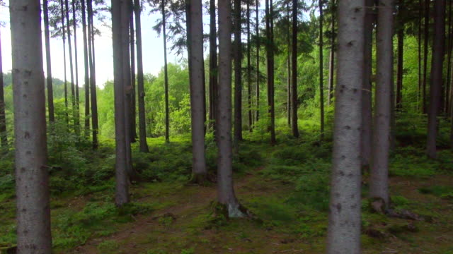 MS SIDE POV AERIAL Shot of forest / Wasserburg, Bavaria, Germany