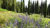 WS PAN Shot of Giardino Giusti botanical renaissance park / Verona, Veneto, Italy