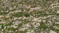 MS TS ZI AERIAL Shot of goats climbing up mountain / Pserimos, Dodecanese, Greece
