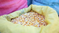 CU Shot of grains and vegetables in food fair / Potosi Bolivia