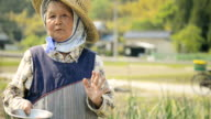 MS Shot of Grandmother of farmers standing in field / Toyooka, Hyogo, Japan