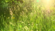 MS Shot of grass meadow / Kastel Staadt, Rhineland Palatinate, Germany