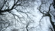 MS DS Shot of ground view of leafless trees / Ben Hope, Scotland, United Kingdom