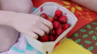 'CU Shot of hand picking strawberry out of paper box at picnic / Berlin, Germany'