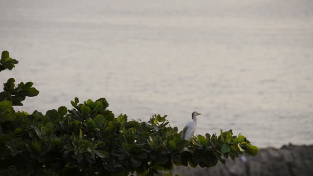 MS Shot of heron sitting in swaying tree by the beach / Luanda, Angola
