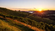 T/L 9K shot of hilly vineyards at sunset