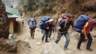 MS Shot of Himalayas Dzo Yaks are hearded up trail by hearders outside lodge / SoluKhumbu, Nepal