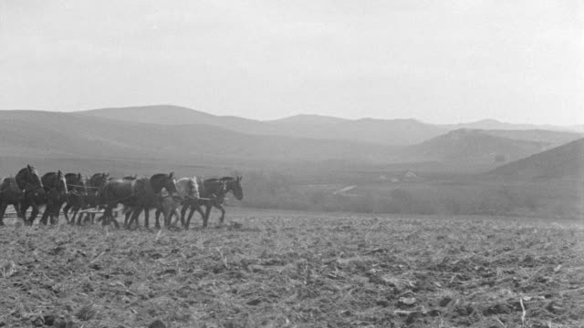 MS Shot of horses and mules plowing field
