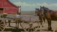 MS Shot of horses in front of red barn
