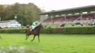 MS TS Shot of Horses racing by right before finish / Krefeld, North Rhine Westphalia, Germany