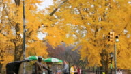 WS TU Shot of Hotdog stands under autumn color trees and Horse carriage and people crossing street / New York, United States