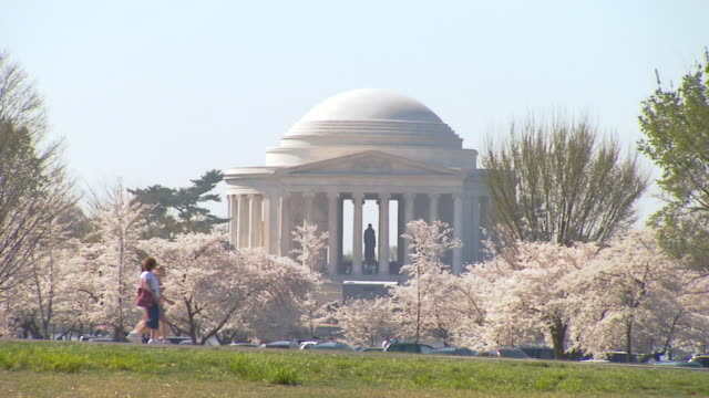 WS Shot of Jefferson Memorial in Washington DC framed by cherry blossom trees in bloom as pedestrians and traffic / Washington, District of Columbia, United States