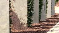 CU Shot of landscape architecture, flagstone, yew, Taxus baccata / Saarburg, Rhineland-Palatinate, Germany