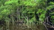 MS POV Shot of Louisiana Swamp