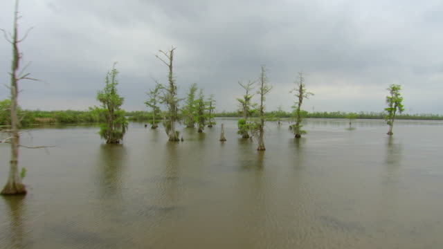 MS AERIAL Shot of low through cypress swamp / Louisiana, United States