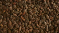 CU Shot of man moving hand in large pile of roasted cocoa beans / kauai, hawaii, united states