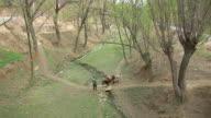 WS HA Shot of man pulling bullock cart / Valley of Yellow River, Shanxi, China